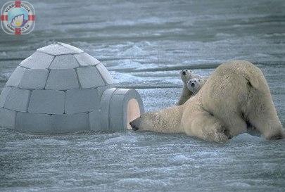 Кто живет на полюсе? 北極