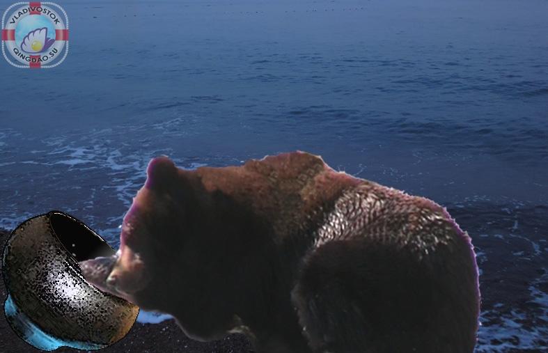 медведь_котел
